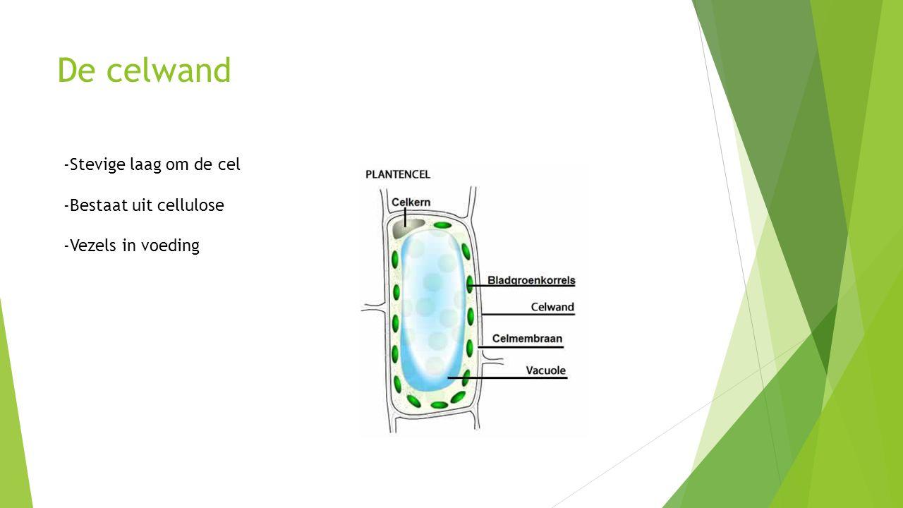 De celwand -Stevige laag om de cel -Bestaat uit cellulose -Vezels in voeding