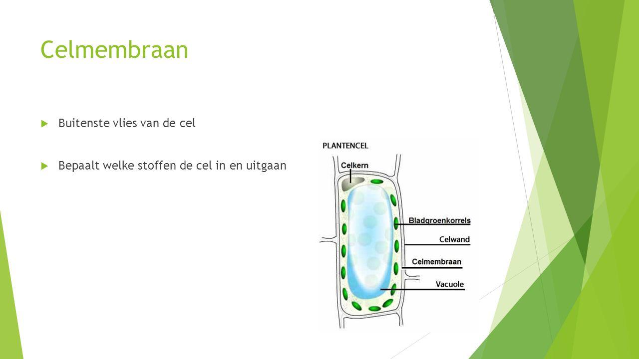 Celmembraan  Buitenste vlies van de cel  Bepaalt welke stoffen de cel in en uitgaan