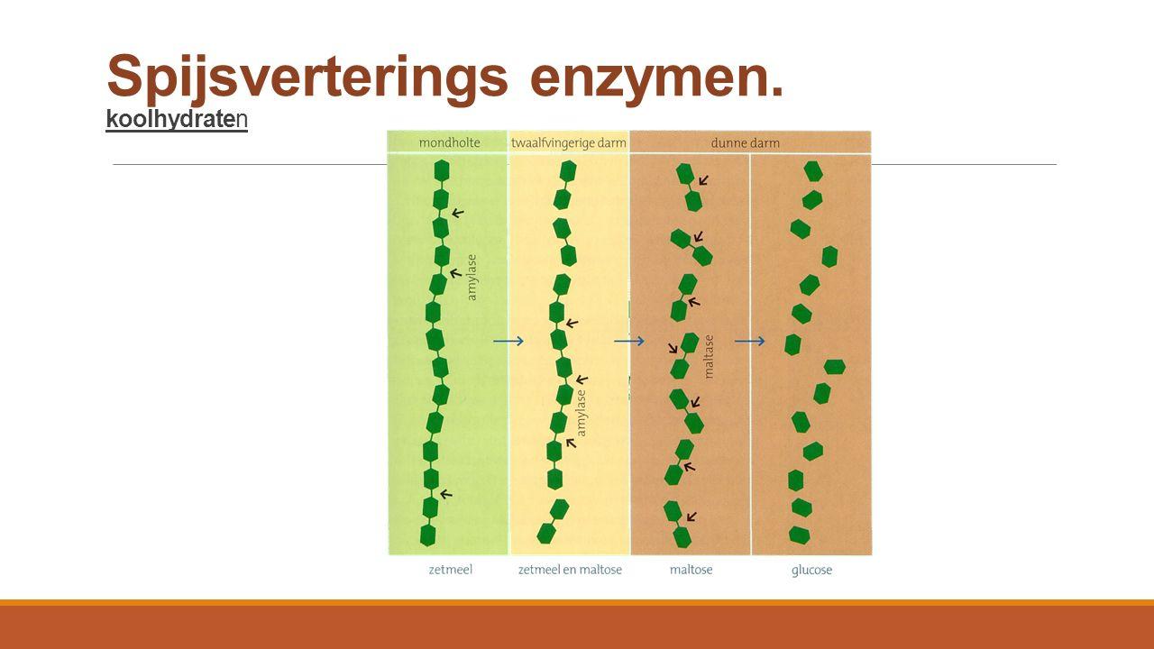 Spijsverterings enzymen. koolhydraten