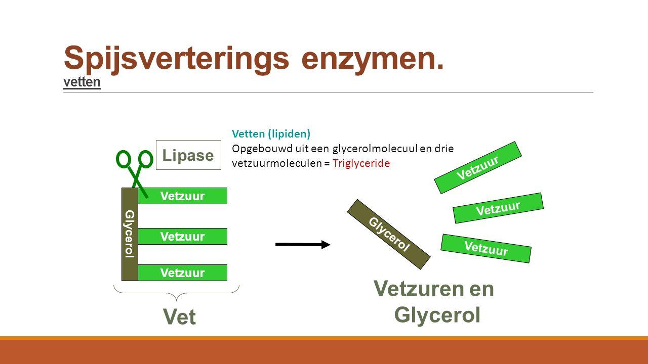 Spijsverterings enzymen. vetten Glycerol Vetzuur Glycerol Vetzuur Lipase Vet Vetzuren en Glycerol Vetten (lipiden) Opgebouwd uit een glycerolmolecuul