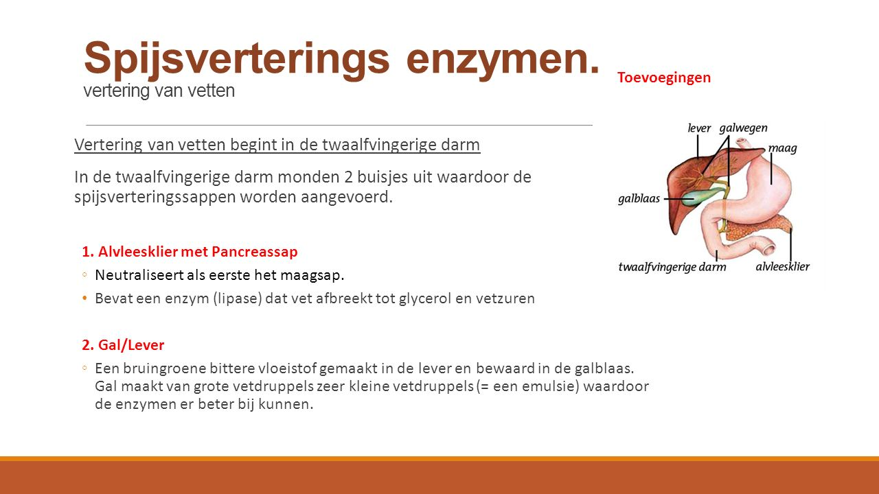 Spijsverterings enzymen. vertering van vetten Vertering van vetten begint in de twaalfvingerige darm In de twaalfvingerige darm monden 2 buisjes uit w