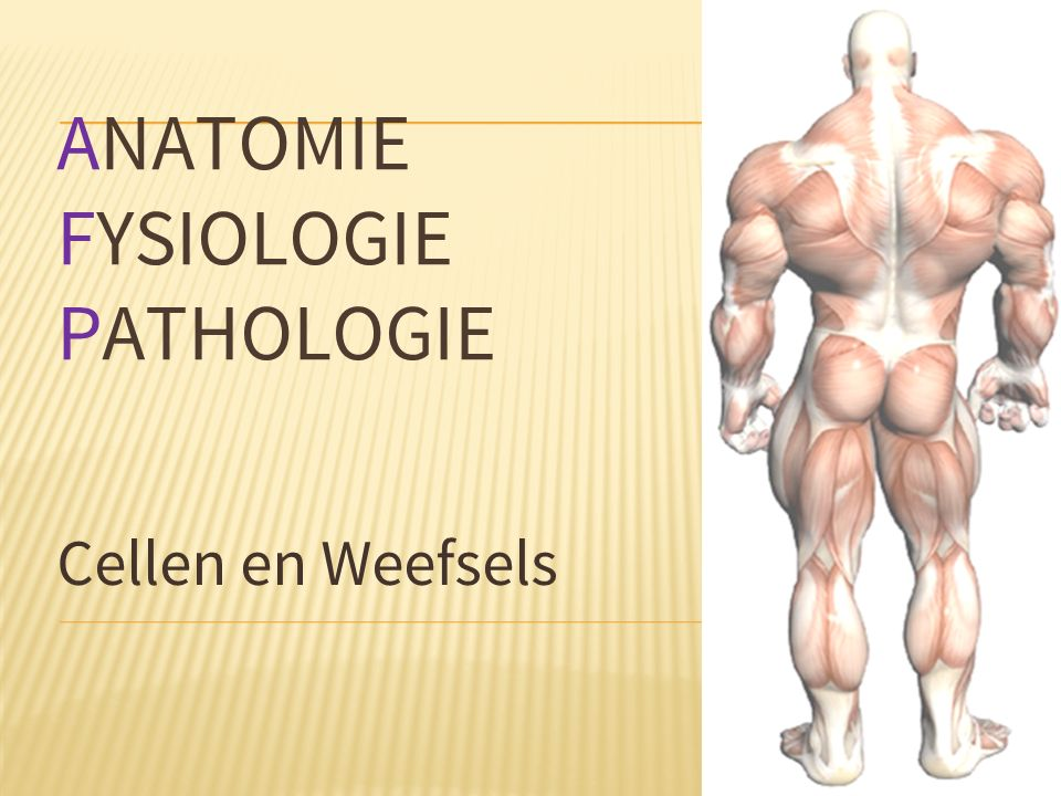 ANATOMIE FYSIOLOGIE PATHOLOGIE Cellen en Weefsels