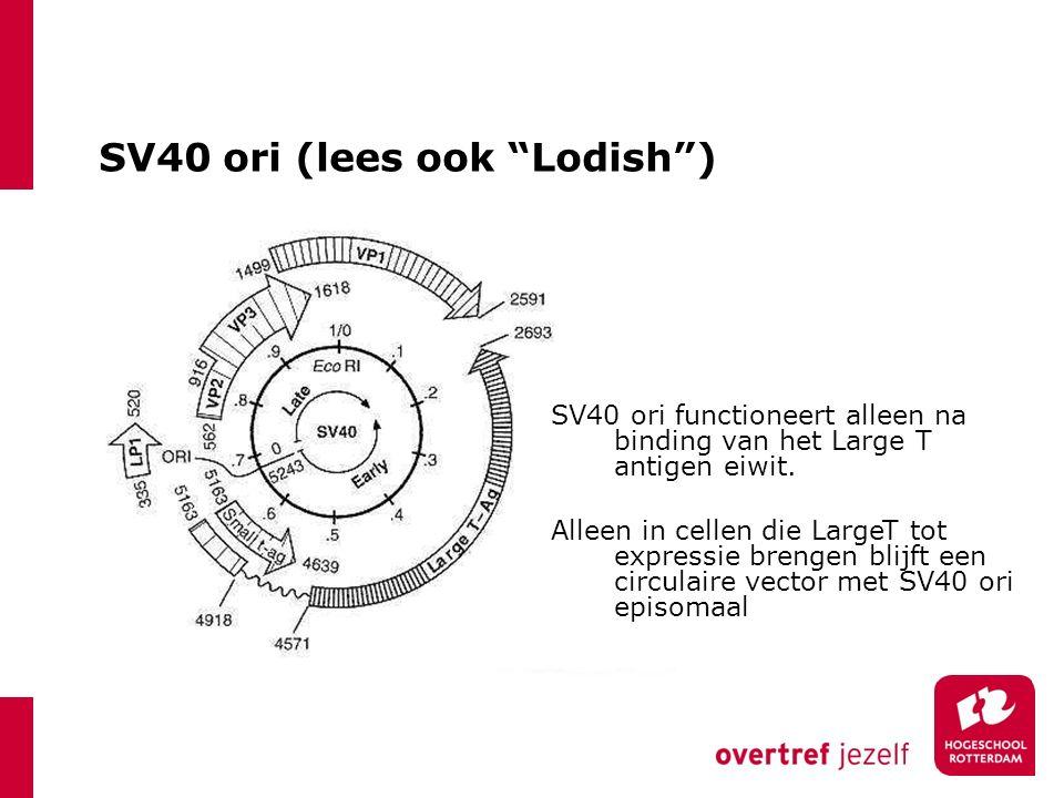 """SV40 ori (lees ook """"Lodish"""") SV40 ori functioneert alleen na binding van het Large T antigen eiwit. Alleen in cellen die LargeT tot expressie brengen"""