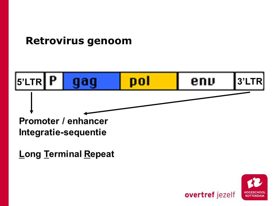 Retrovirus genoom 3'LTR 5'LTR Capside eiwit Reverse transcriptase Envelop eiwit Packaging Signaal ψ