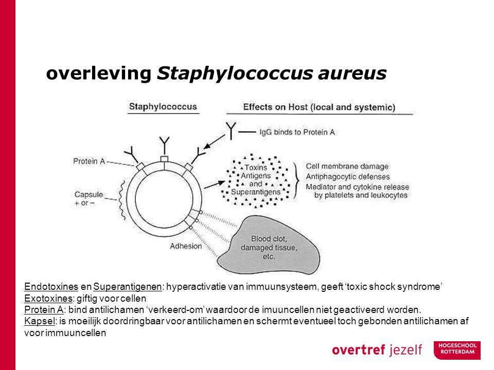 overleving Staphylococcus aureus Endotoxines en Superantigenen: hyperactivatie van immuunsysteem, geeft 'toxic shock syndrome' Exotoxines: giftig voor cellen Protein A: bind antilichamen 'verkeerd-om' waardoor de imuuncellen niet geactiveerd worden.