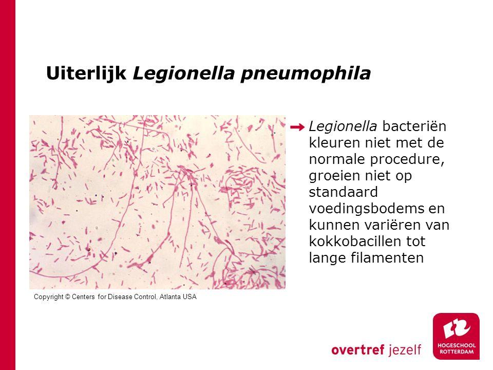 Uiterlijk Legionella pneumophila Legionella bacteriën kleuren niet met de normale procedure, groeien niet op standaard voedingsbodems en kunnen variëren van kokkobacillen tot lange filamenten Copyright © Centers for Disease Control, Atlanta USA
