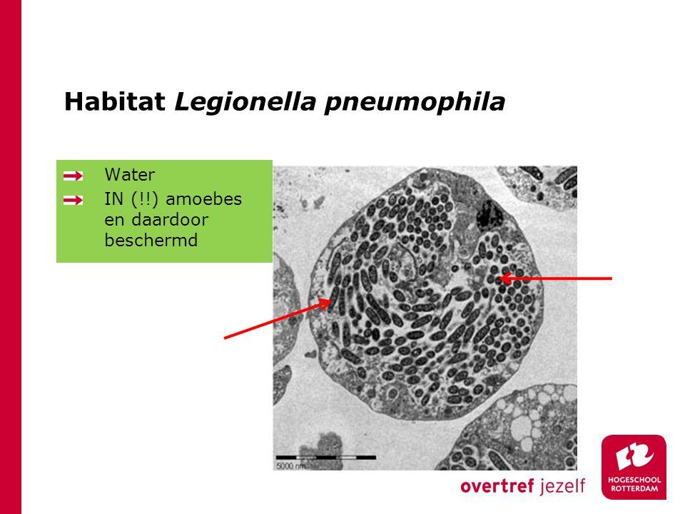 Habitat Legionella pneumophila Water IN (!!) amoebes en daardoor beschermd