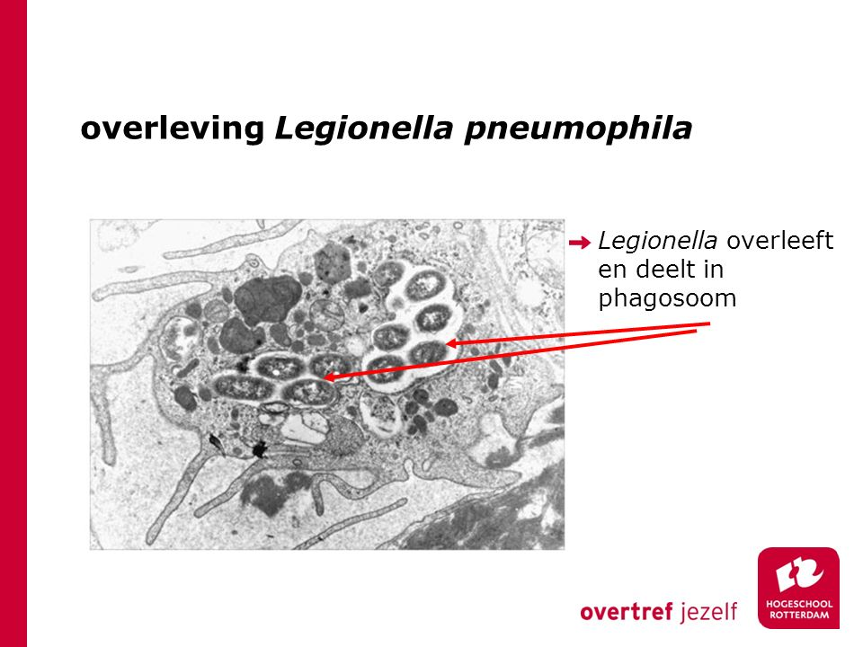 overleving Legionella pneumophila Legionella overleeft en deelt in phagosoom