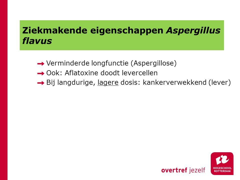 Ziekmakende eigenschappen Aspergillus flavus Verminderde longfunctie (Aspergillose) Ook: Aflatoxine doodt levercellen Bij langdurige, lagere dosis: ka