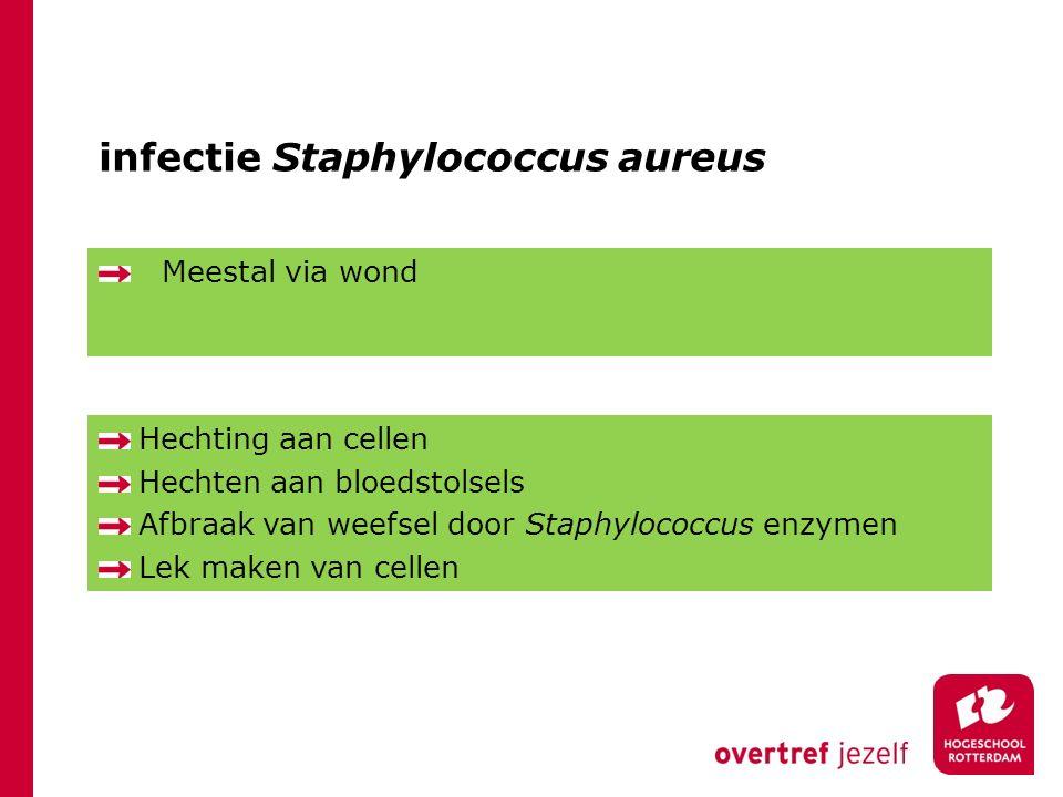 infectie Staphylococcus aureus Meestal via wond Hechting aan cellen Hechten aan bloedstolsels Afbraak van weefsel door Staphylococcus enzymen Lek maken van cellen