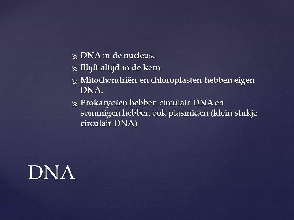  DNA in de nucleus.  Blijft altijd in de kern  Mitochondriën en chloroplasten hebben eigen DNA.  Prokaryoten hebben circulair DNA en sommigen hebb