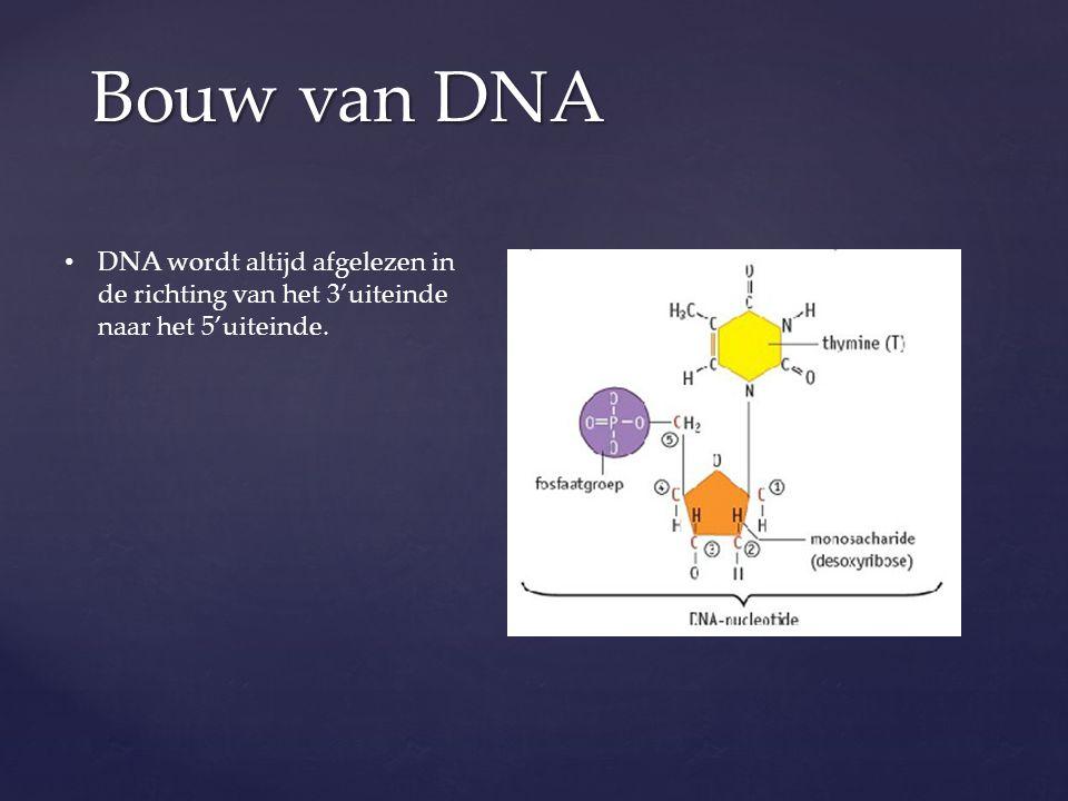 Bouw van DNA DNA wordt altijd afgelezen in de richting van het 3'uiteinde naar het 5'uiteinde.