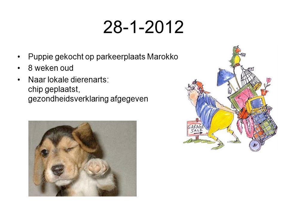 28-1-2012 Puppie gekocht op parkeerplaats Marokko 8 weken oud Naar lokale dierenarts: chip geplaatst, gezondheidsverklaring afgegeven