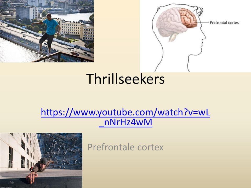 Thrillseekers https://www.youtube.com/watch?v=wL _nNrHz4wM Prefrontale cortex