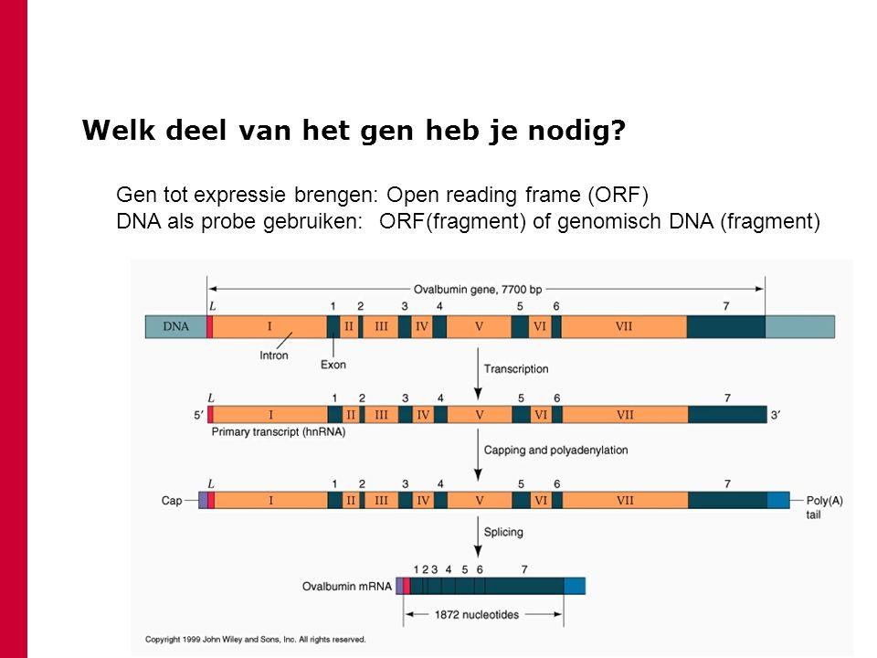 Welk deel van het gen heb je nodig.