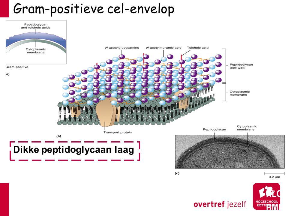 Gram-positieve cel-envelop HLO BML Dikke peptidoglycaan laag