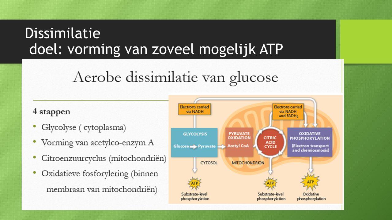 Dissimilatie doel: vorming van zoveel mogelijk ATP