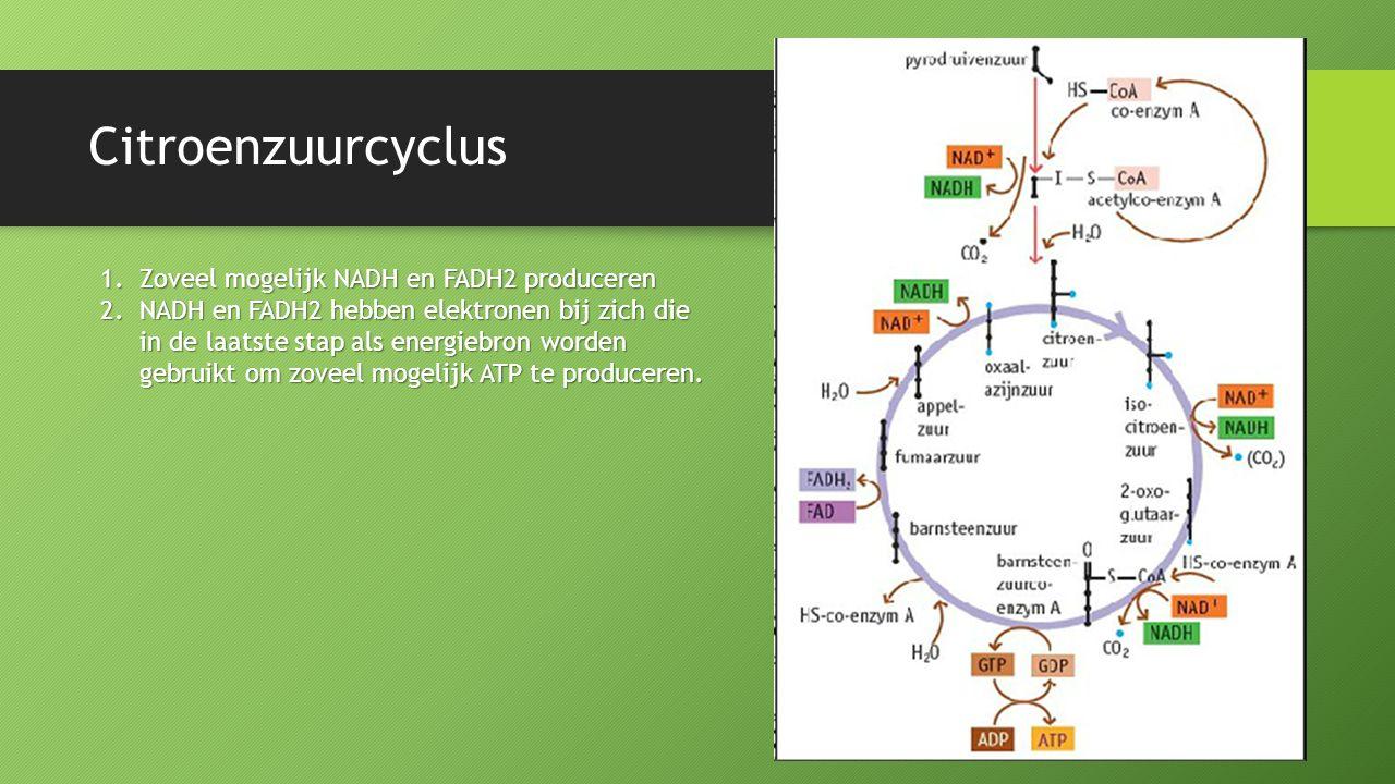 Citroenzuurcyclus 1.Zoveel mogelijk NADH en FADH2 produceren 2.NADH en FADH2 hebben elektronen bij zich die in de laatste stap als energiebron worden