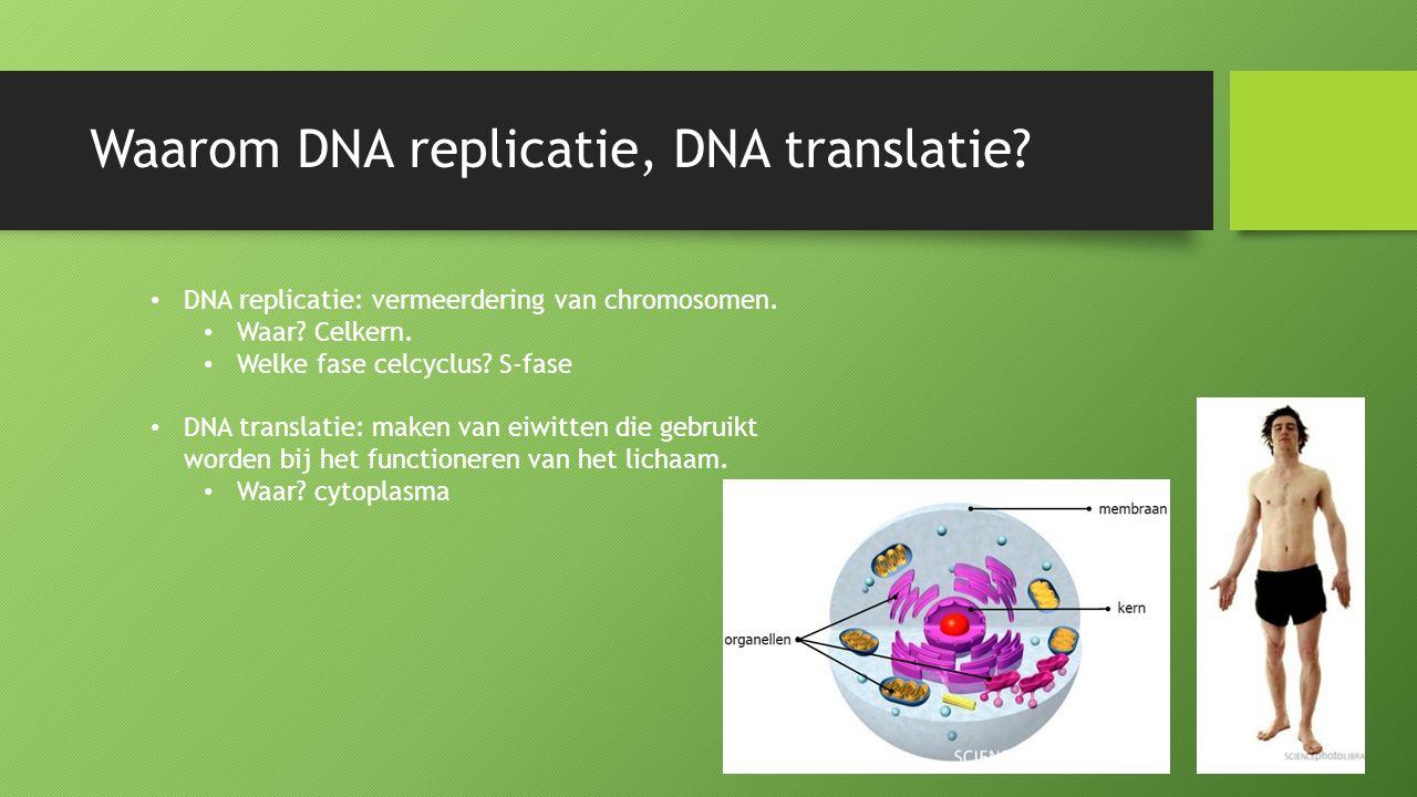 Waarom DNA replicatie, DNA translatie? DNA replicatie: vermeerdering van chromosomen. Waar? Celkern. Welke fase celcyclus? S-fase DNA translatie: make