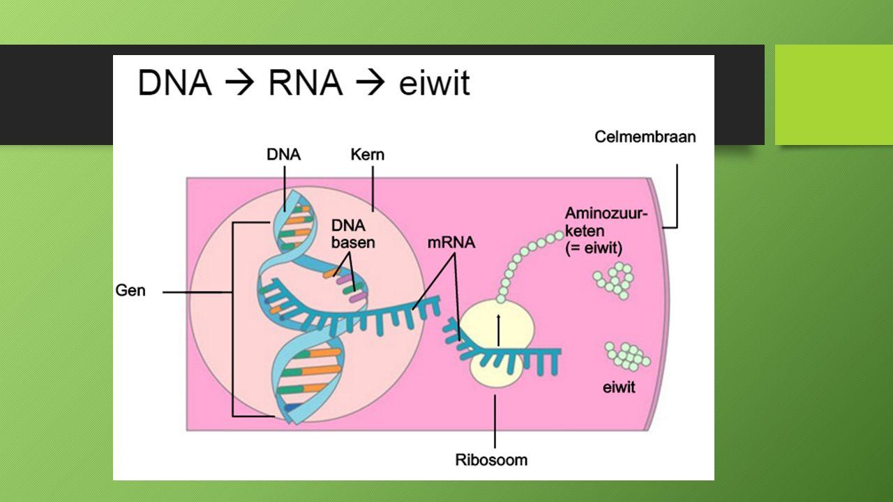 RNA interferentie http://biologiepagina.nl/Videobiologie/RNAi.htm http://biologiepagina.nl/Videobiologie/RNAi.htm http://biologiepagina.nl/Videobiologie/RNAi.htm