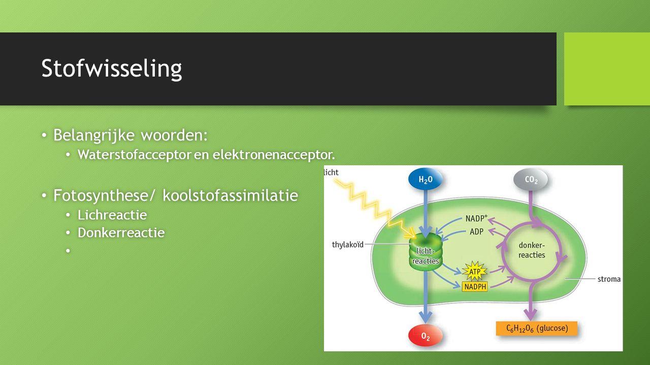 Stofwisseling Belangrijke woorden: Belangrijke woorden: Waterstofacceptor en elektronenacceptor. Waterstofacceptor en elektronenacceptor. Fotosynthese