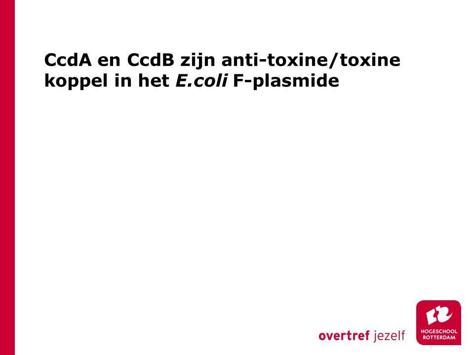 CcdA en CcdB zijn anti-toxine/toxine koppel in het E.coli F-plasmide