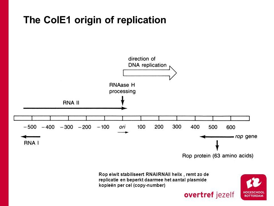 The ColE1 origin of replication Rop eiwit stabiliseert RNAI/RNAII helix, remt zo de replicatie en beperkt daarmee het aantal plasmide kopieën per cel (copy-number)