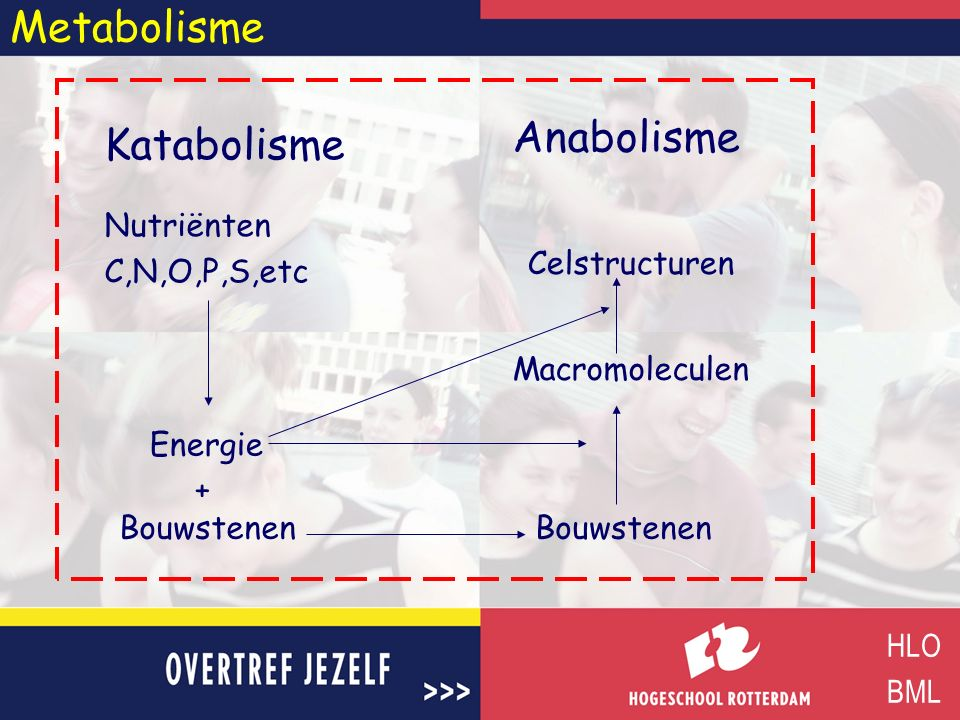 Metabolisme Katabolisme HLO BML Anabolisme Nutriënten C,N,O,P,S,etc Energie Bouwstenen Macromoleculen Celstructuren +