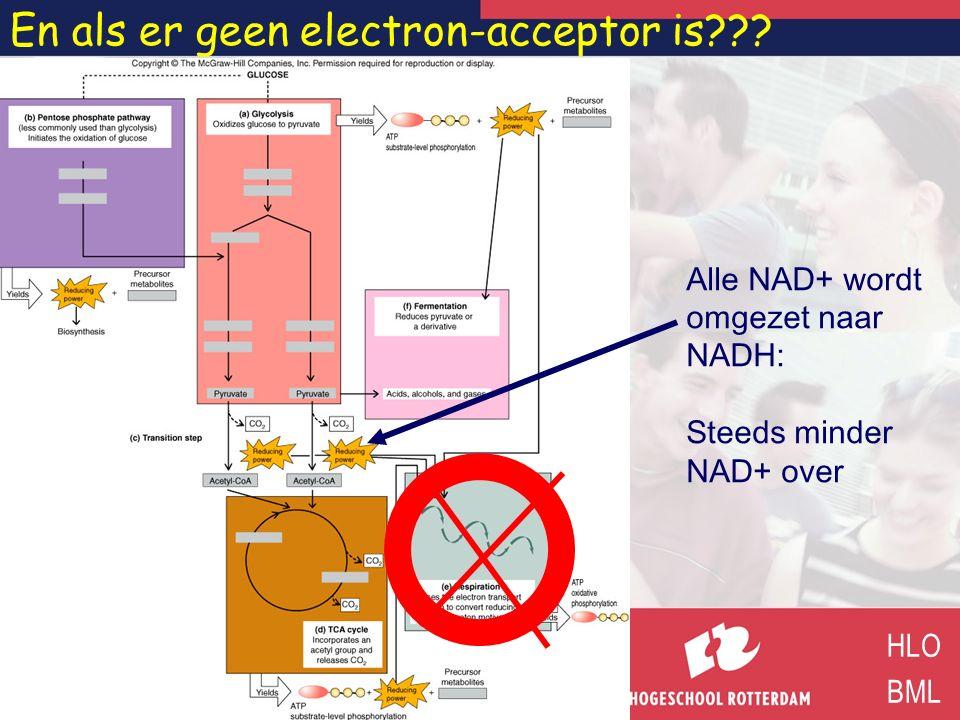 En als er geen electron-acceptor is??? HLO BML Alle NAD+ wordt omgezet naar NADH: Steeds minder NAD+ over