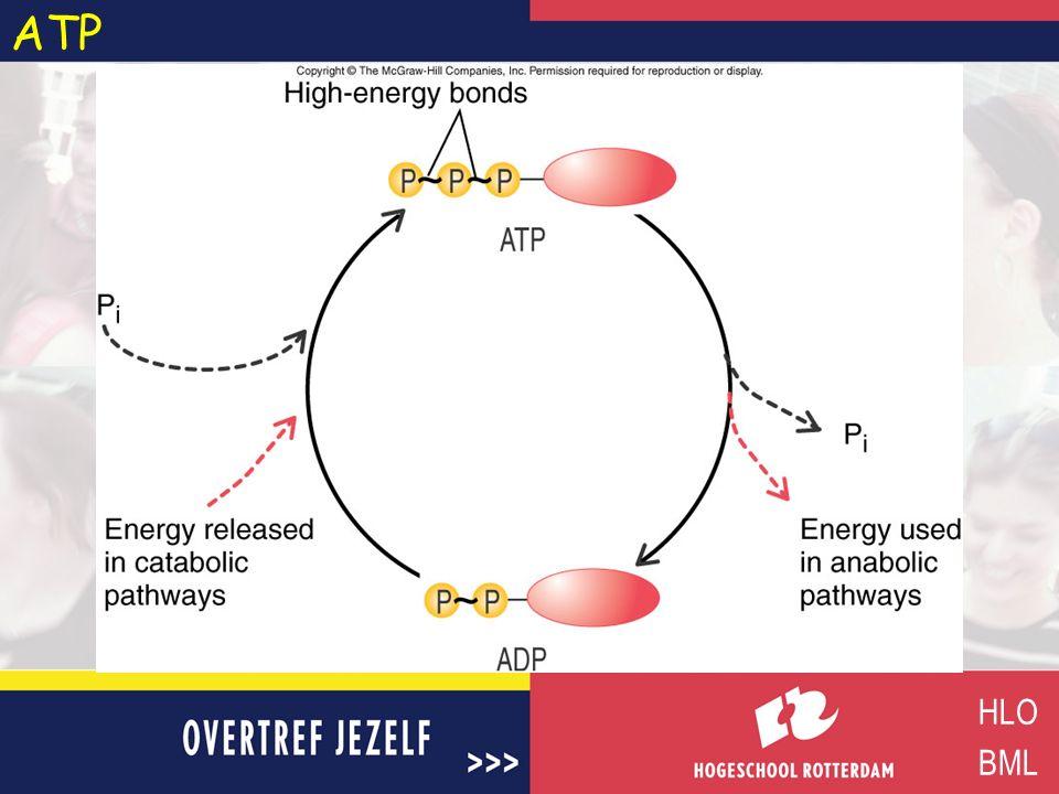 Energie voor ATP vorming HLO BML Licht:foto fosforylatie Chemische verbinding (exogene reactie):substraat fosforylatie Protonen gradiënt (proton-motive force) / electronentransport:oxidatieve fosforylatie