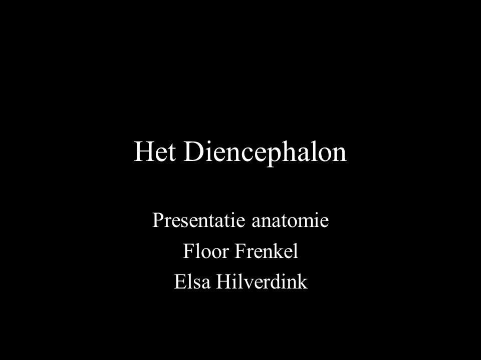 Het Diencephalon Presentatie anatomie Floor Frenkel Elsa Hilverdink