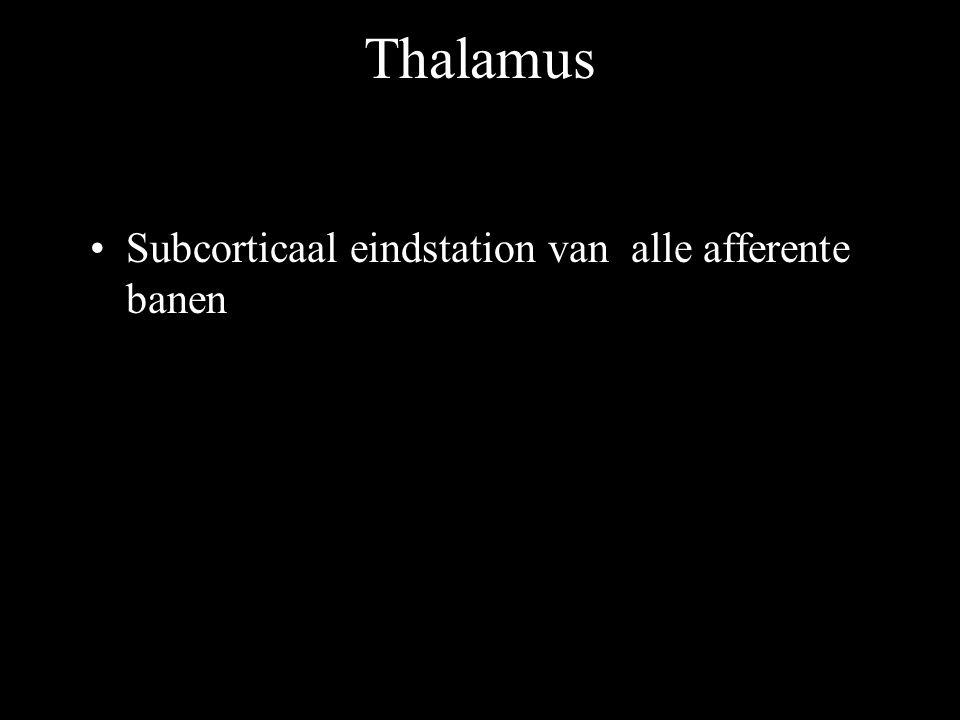 Thalamus 2 Anteriore kerngroep -Verbonden met de rand van gyrus cinguli Mediale kerngroep -Verbonden met schors van frontale kwab Laterale en ventrale kerngroep (VPL en VPM kern) -Verbonden met de sensibele postcentrale regio Pulvinar -Projecteert op schors van pariëtale en temporale kwabben Corpora geniculata med.