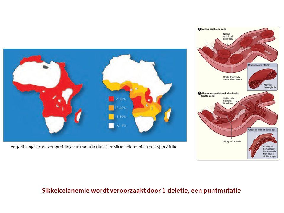 Sikkelcelanemie wordt veroorzaakt door 1 deletie, een puntmutatie Vergelijking van de verspreiding van malaria (links) en sikkelcelanemie (rechts) in Afrika