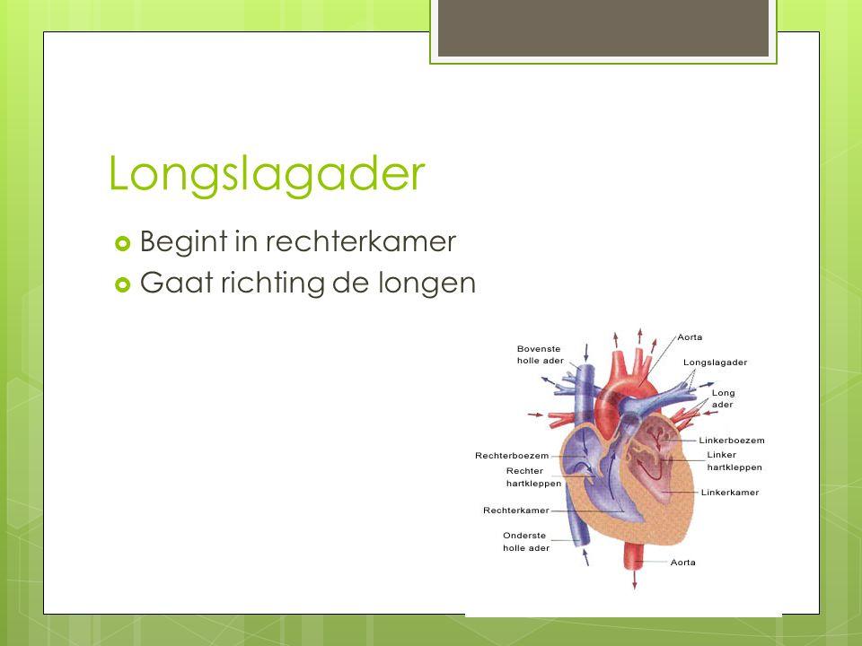 Longslagader  Begint in rechterkamer  Gaat richting de longen