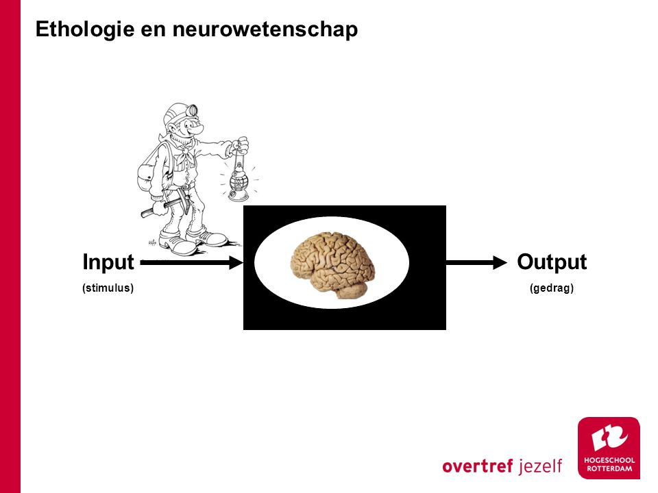 Input (stimulus) Output (gedrag) Ethologie en neurowetenschap