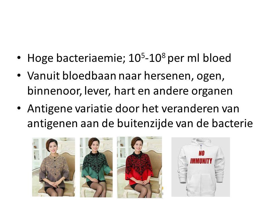 Hoge bacteriaemie; 10 5 -10 8 per ml bloed Vanuit bloedbaan naar hersenen, ogen, binnenoor, lever, hart en andere organen Antigene variatie door het veranderen van antigenen aan de buitenzijde van de bacterie