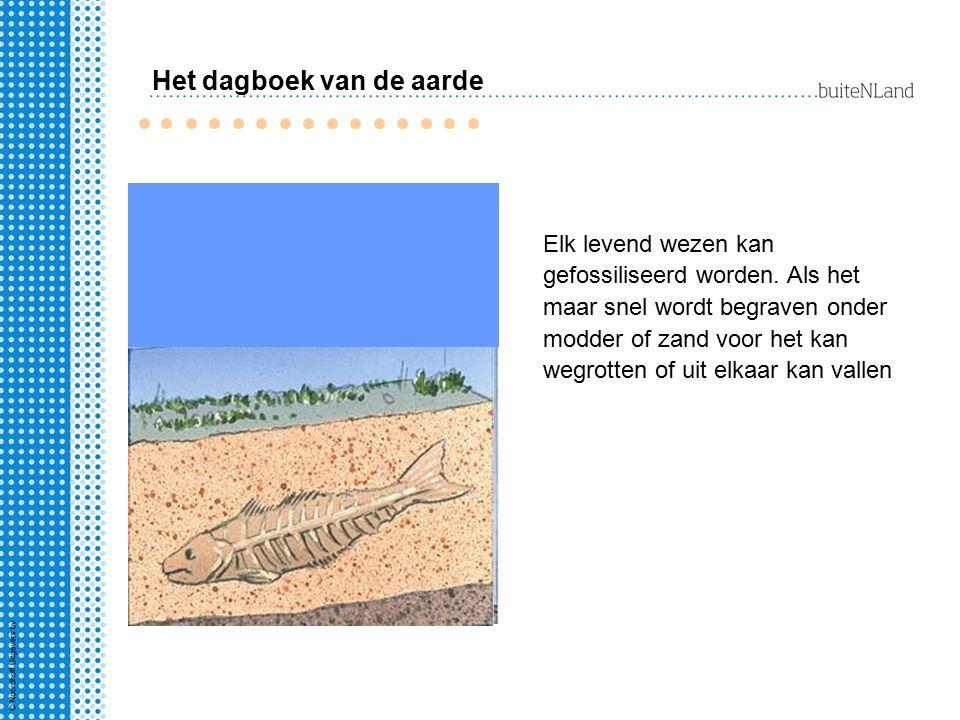 Na vele jaren ontstaan er op de zeebodem dikke lagen zand en klei (sediment).