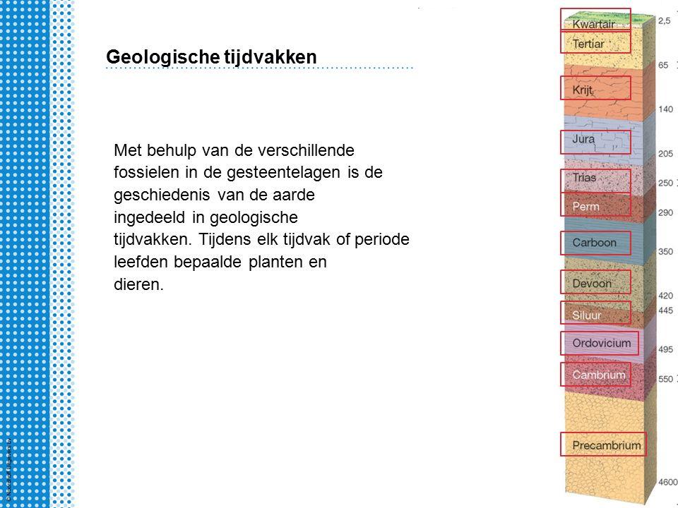 Met behulp van de verschillende fossielen in de gesteentelagen is de geschiedenis van de aarde ingedeeld in geologische tijdvakken.