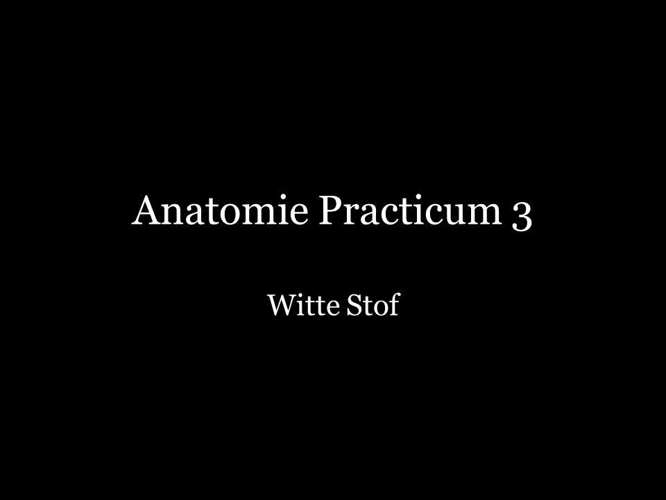 Anatomie Practicum 3 Witte Stof