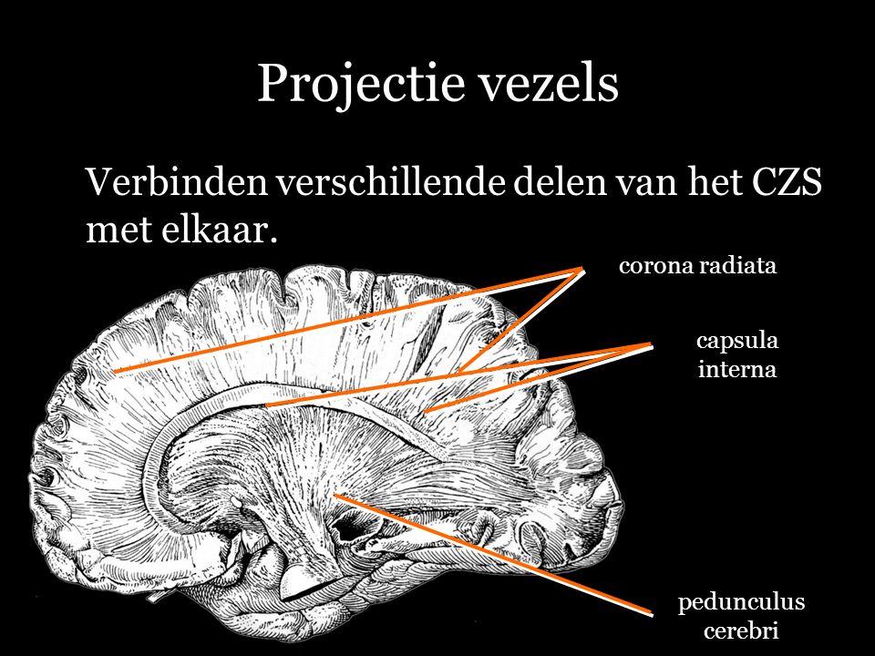 Projectie vezels Verbinden verschillende delen van het CZS met elkaar. pedunculus cerebri corona radiata capsula interna
