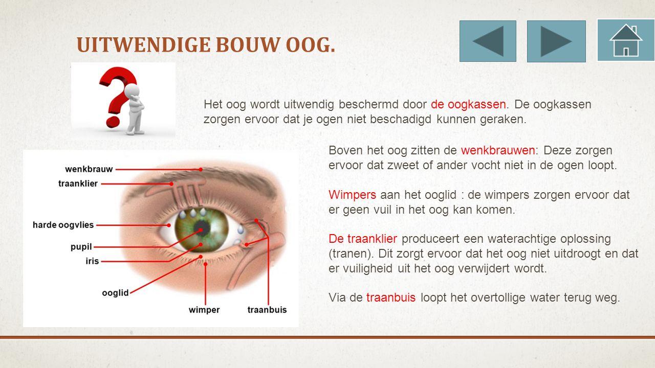UITWENDIGE BOUW OOG. Het oog wordt uitwendig beschermd door de oogkassen. De oogkassen zorgen ervoor dat je ogen niet beschadigd kunnen geraken. Boven
