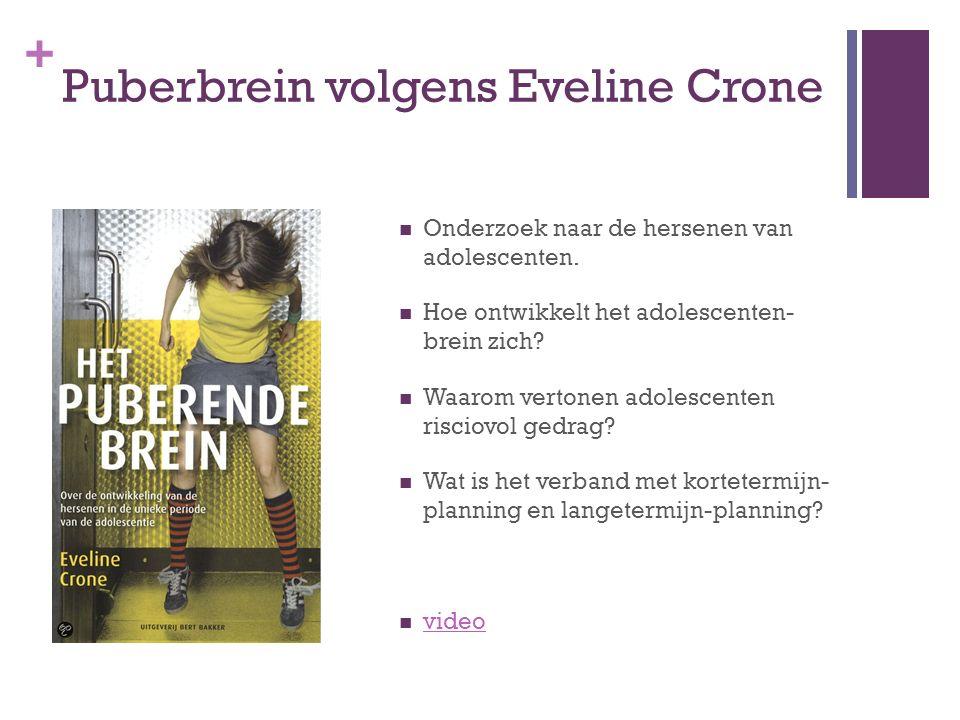 + Puberbrein volgens Eveline Crone Onderzoek naar de hersenen van adolescenten.
