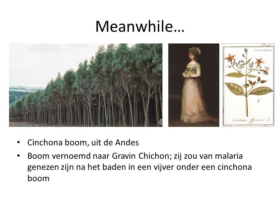 Meanwhile… Cinchona boom, uit de Andes Boom vernoemd naar Gravin Chichon; zij zou van malaria genezen zijn na het baden in een vijver onder een cincho