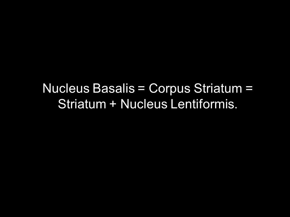 Nucleus Basalis = Corpus Striatum = Striatum + Nucleus Lentiformis.