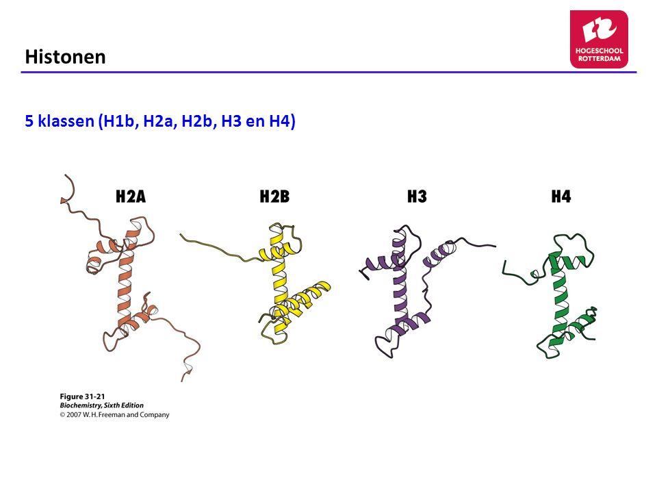 Histonen 5 klassen (H1b, H2a, H2b, H3 en H4)