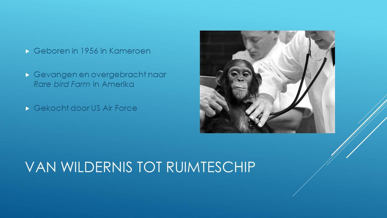 VAN WILDERNIS TOT RUIMTESCHIP  Geboren in 1956 in Kameroen  Gevangen en overgebracht naar Rare bird Farm in Amerika  Gekocht door US Air Force