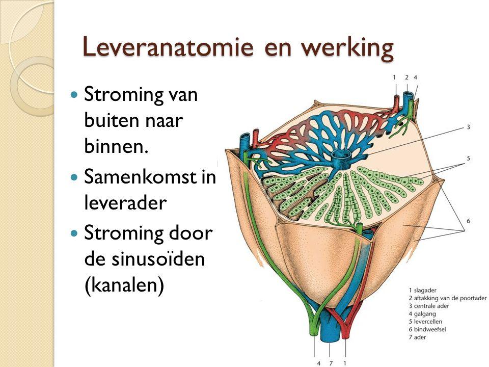 Leveranatomie en werking Stroming van buiten naar binnen. Samenkomst in leverader Stroming door de sinusoïden (kanalen)