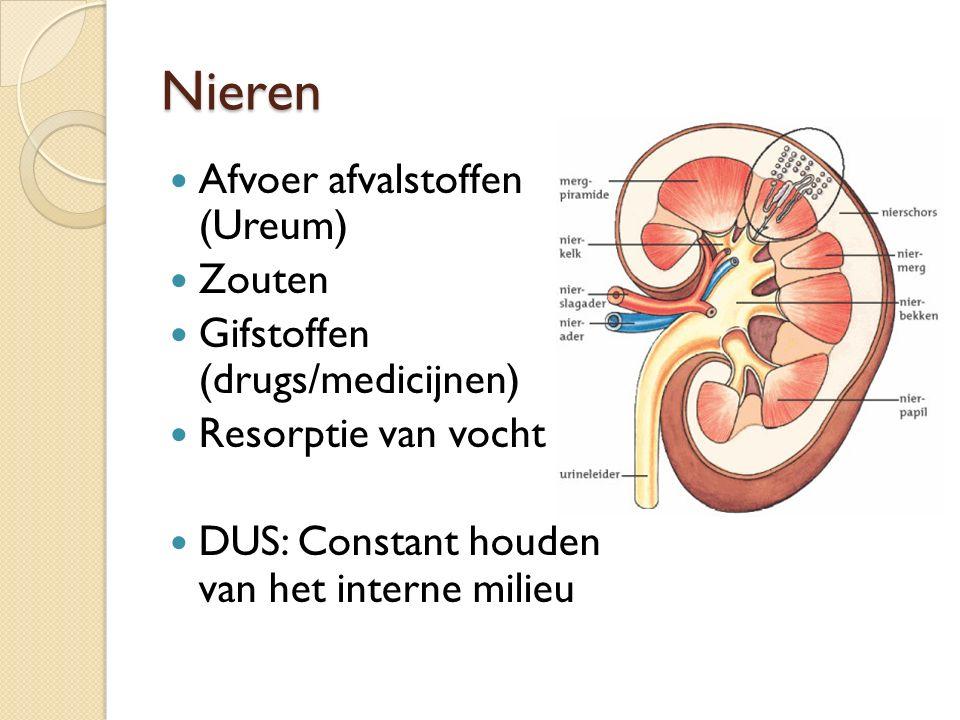 Nieren Afvoer afvalstoffen (Ureum) Zouten Gifstoffen (drugs/medicijnen) Resorptie van vocht DUS: Constant houden van het interne milieu