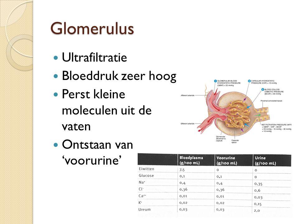 Glomerulus Ultrafiltratie Bloeddruk zeer hoog Perst kleine moleculen uit de vaten Ontstaan van 'voorurine'
