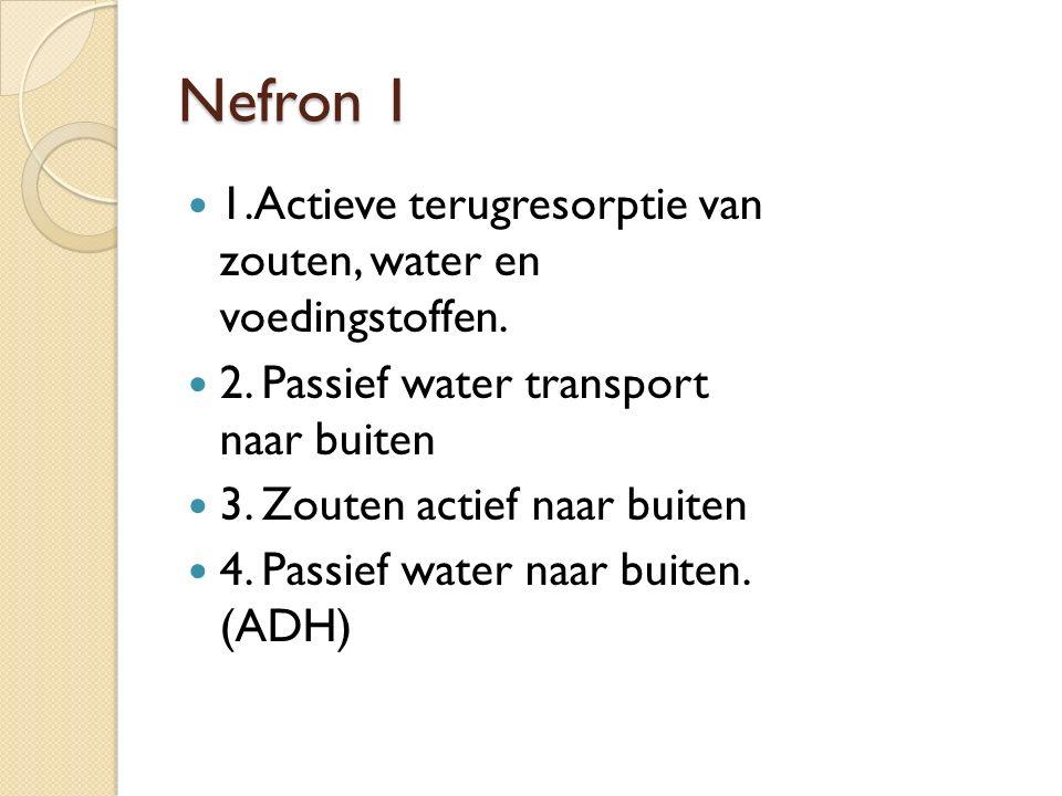 Nefron 1 1.Actieve terugresorptie van zouten, water en voedingstoffen. 2. Passief water transport naar buiten 3. Zouten actief naar buiten 4. Passief